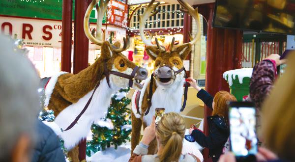 christmas in halifax reindeers